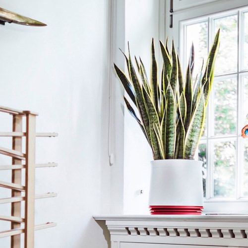 Airy - Plant Pot Purifier