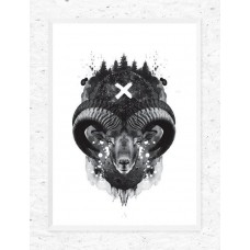 Black Mouflon Framed Print