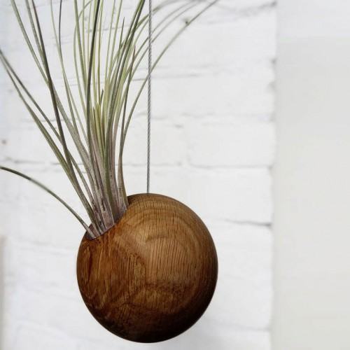 Hanging Sphere Air Plant - Dark Oak