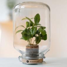 PikaPlant Flower Jar