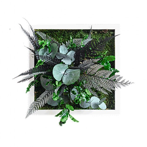Plant Island Frame 22 x 22 - 3 Pack