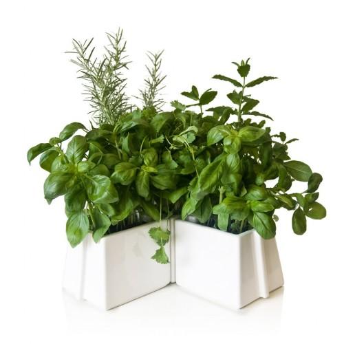 X-Tray Plant Pots